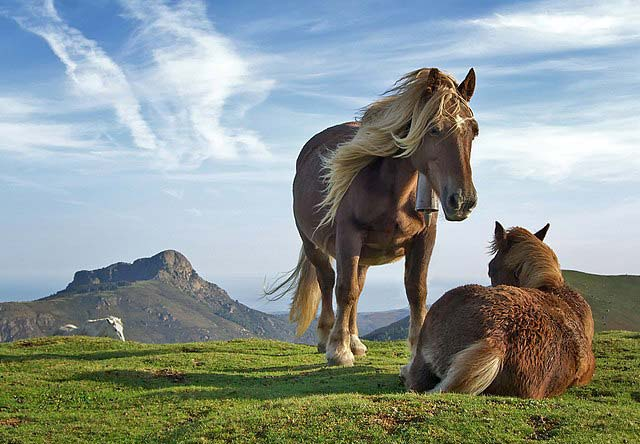 Horses on Bianditz Mountain Spain